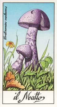 I Funghi piu Belli del Mondo